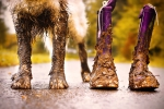 Dirty dog feet and boots